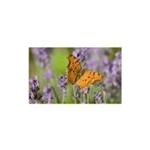 Zerbino da interno decorato farfalla