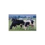 Zerbino da interno decorato mucca