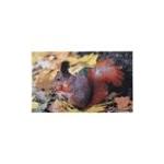 Zerbino da interno decorato scoiattolo
